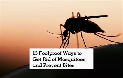 get rid of mosquitoes in backyard best way to get rid of mosquitoes in your backyard how to
