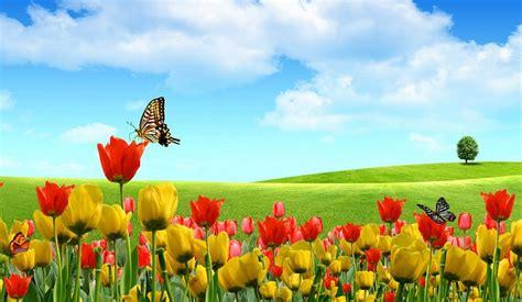 imagenes de jardines y rosas como decorar jardines con plantas que atraen mariposas