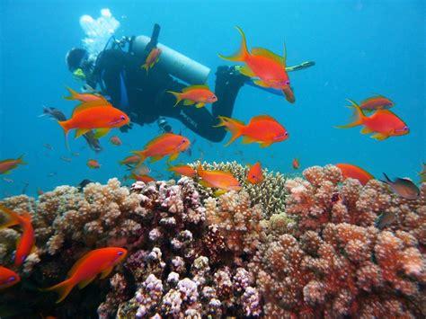 best place to scuba dive find the best places to go scuba diving s cozy