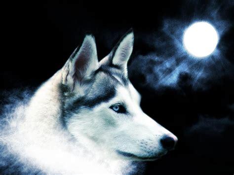 fondos de pantalla de lobos en movimiento fondos de pantalla los mejores fondos de pantalla de lobos taringa