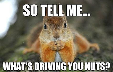Squirrel Nuts Meme - squirrel meme funny and cute squirrel pictures