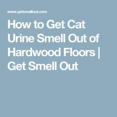 1000 - How To Get Cat Urine Out Of Hardwood Floors