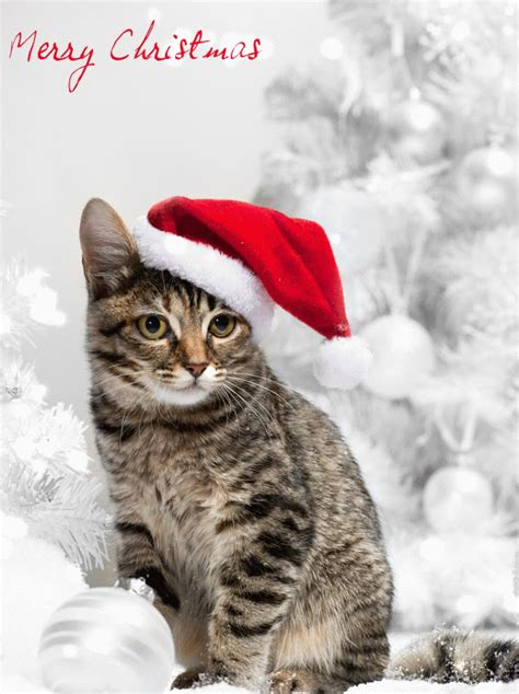 merry christmas cats santa animated cat  hat hd gif litle pups