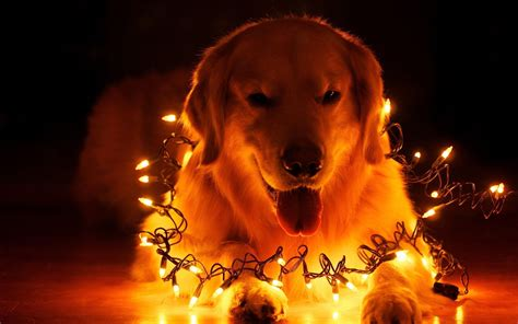 christmas wallpaper with dogs christmas dog wallpapers wallpaper cave