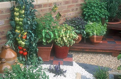 How To Make Kitchen Garden In Pots by Courtyard Kitchen Garden Pots Of Herbs And Tomatoes Growing