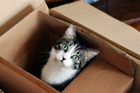 in house furniture movers moving tips for moving with your pets