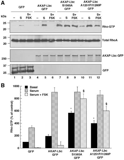 Serum Lbc anchoring of both pka and 14 3 3 inhibits the rho gef