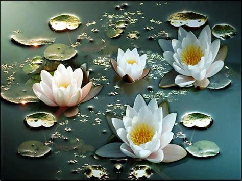 Biji Bunga Teratai khasiat tanaman teratai nailuf