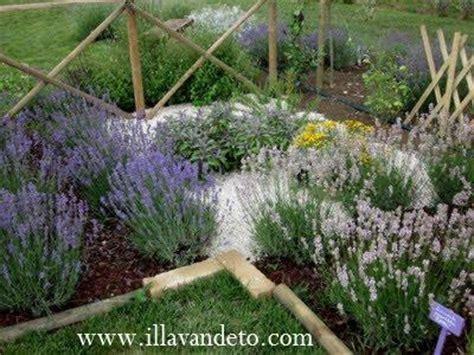 lavanda in giardino il lavandeto di assisi vivaio e giardino della lavanda