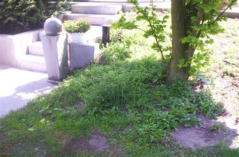 Pflegeleichte Sträucher Für Garten by Schlafzimmerm 246 Bel Streichen