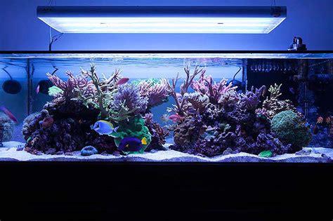 aquarium design by michael michael panganiban solitude127 sps dominated reef