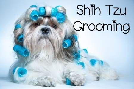 how to groom your shih tzu at home grooming the shih tzu an overview