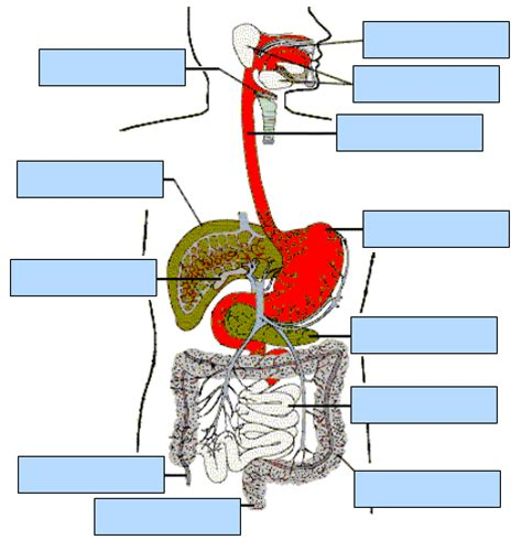 interactive digestive system diagram digestive system interactive science classroom