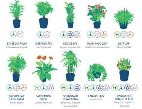 nasa best plants top 18 household plants to purify the air according to