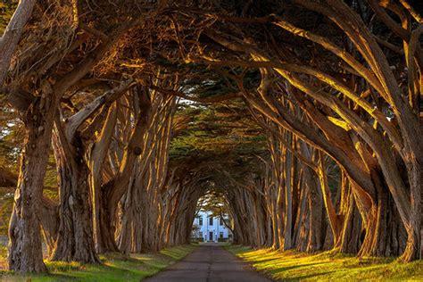 Wisteria Tunnels Tokyo by Tree Pixelpush Design