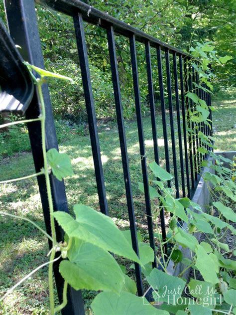 garden banister railing into garden trellis just call me homegirl