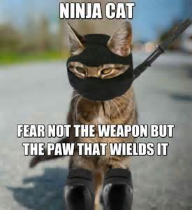 My Ninja Meme - 31 most funniest ninja meme photos and images of all the time
