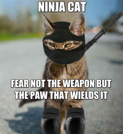 Ninja Meme - 28 most funniest ninja memes on internet picsmine
