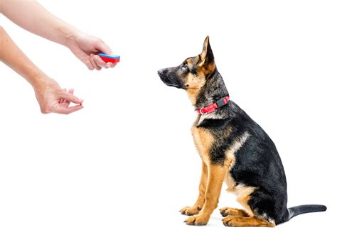clicker puppy tips on clicker dogs pet care facts