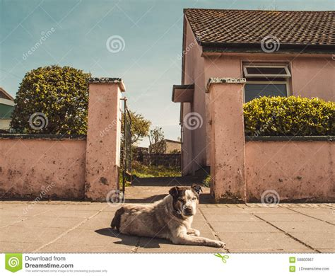 watch dog house watch dog outside the house stock photo image 58800967