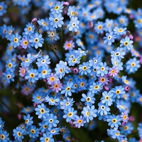 imagenes todo flores las mejores plantas perennes con flores