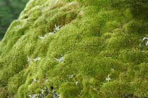 identification what is the type of moss that commonly