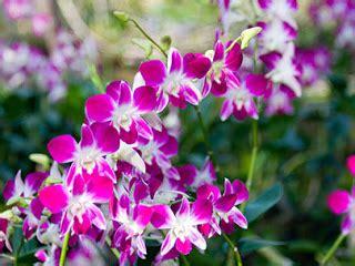 Pot Tanaman Anggrek putra garden tips mengganti pot tanaman anggrek