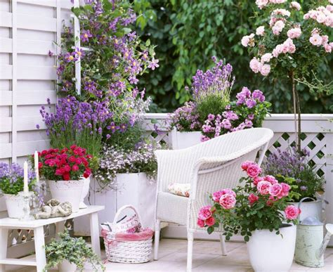 best flowers for small pots small rose garden growing roses in containers balcony