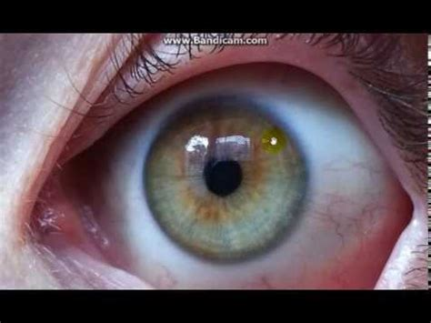 Eye Detox Symptoms by Fruit Cleanse Water Fast Herb Detox Big Eye Changes Day