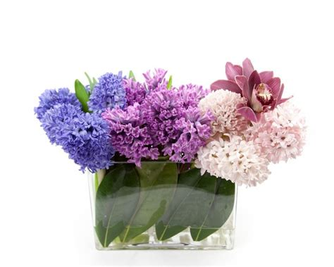 giacinti in vaso giacinti regalati domande e risposte piante appartamento