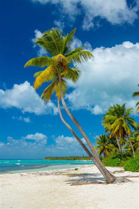 tropical palm trees free stock photo public domain pictures