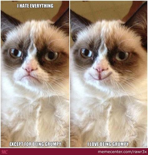 Grumpy Cat Coma Meme - 17 best images about grummpy cat on pinterest cats don