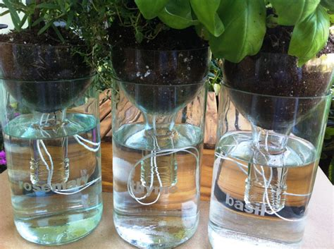 Water Planter by Wine Bottle Planters Self Watering Set Of Three 3 By