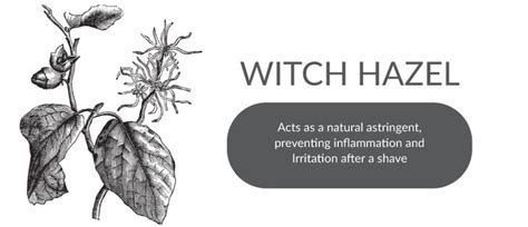 ingriwn hairs witch hazel 13 best our products images on pinterest cleanse