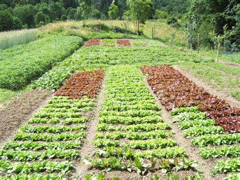 fare l orto in giardino orti e giardini cateringveg