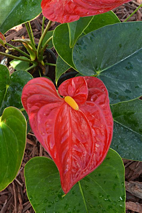 Plants For Backyard by 7 Great Plants To Create A Tropical Feeling In Your