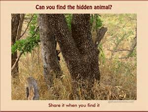 Picture riddle how long did it take you to find the hidden animal in