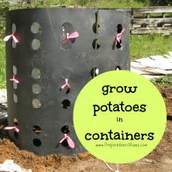 how to grow potatoes in a barrel