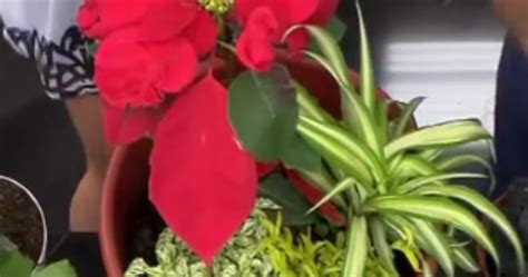 decorar jardines de navidad decoracion jardin navidad facilisimo