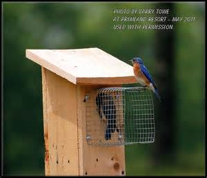 build bluebird house plans predator guard diy pdf american