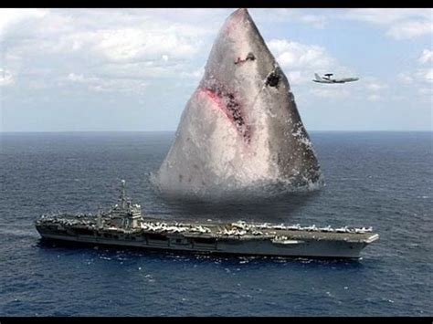 how long is the biggest boat in the world worlds largest shark cought on cam 2013 youtube