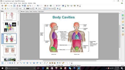 cavities diagram quiz anatomy and physiology test quiz 1 study session