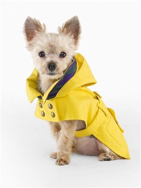 puppy raincoat 1000 ideas about raincoat on dogs baby dogs and baby dogs