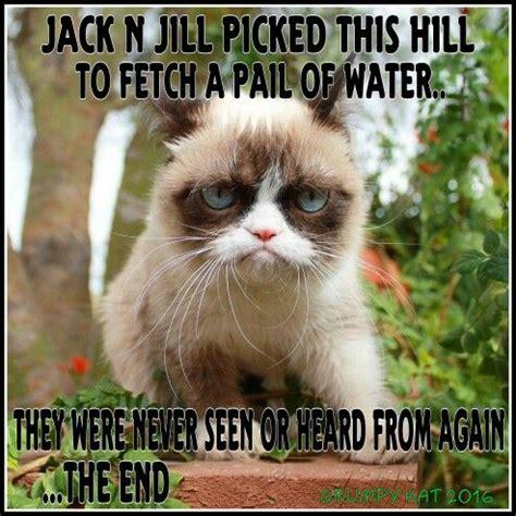 Lesbian Cat Meme - 1022 best images about grumpy cat on pinterest