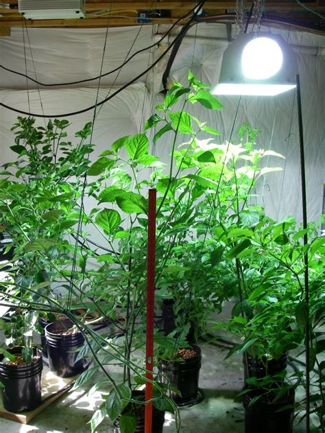 Indoor Vegetable Garden Click Indoor Plants And Indoor Vegetable Gardening