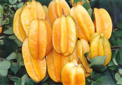 Bibit Belimbing Madu Bangkok jenis jenis buah belimbing waras farm