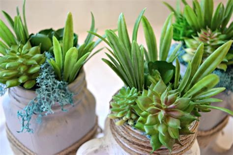 diy succulents diy jar succulents living lovely