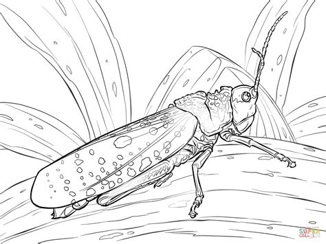 coloring page grasshopper the ant and the grasshopper coloring pages coloring home