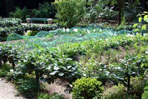 Backyard Vegetable Garden Layout Wiki Veggie Garden Waking Times