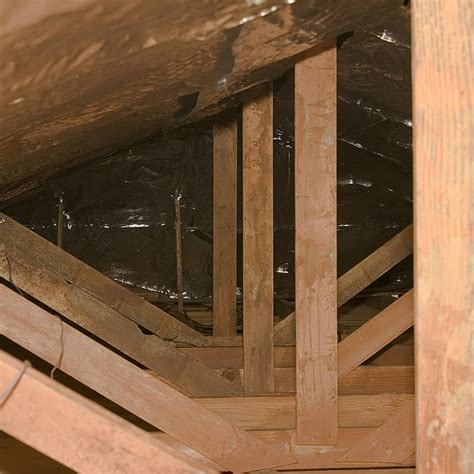 Attic Pest - pest in your attic 5 signs there is one and 8 ways to